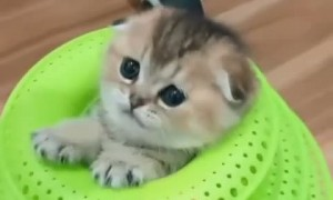 Kitten Hides Inside Favourite Toy