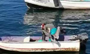 Fisherman Gives Pelican a Friendly Hug