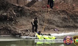 First Responders rescue stranded dog on a chunk of ice in the river