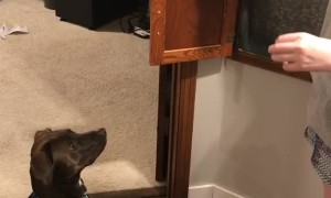 Dog Didn't Know Her Mom Is a Magician
