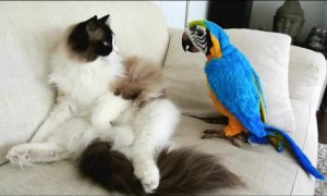 Parrot Wakes Up Sleeping Cat And They Become Instant Friends