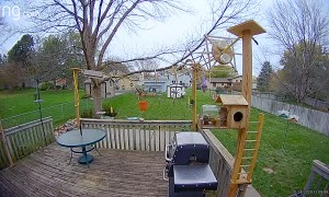 Squirrels Enjoy Spectacular Obstacle Course