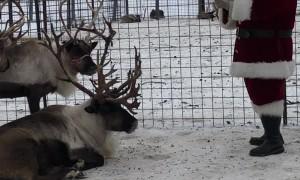 Santa Has Team Meeting About Reindeer Take-Offs
