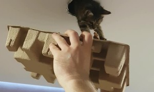 Kitty Gets Back into House Through Ventilation Duct
