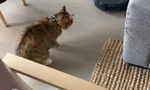 Robot Vacuum Startles Cat