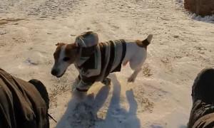 Speedy Doggie Wins Race against Sled