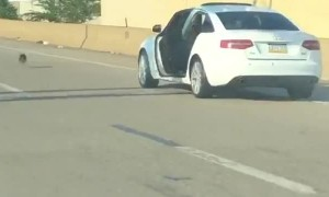 Dog Escapes Car on the Interstate