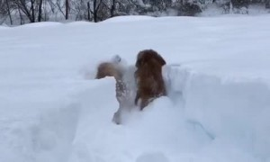 Determined Dogs Won't Let Massive Snow Fall Ruin Their Day
