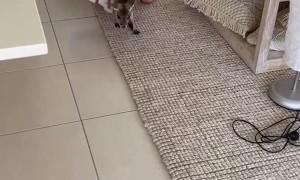 Roommate Brings Home a Kangaroo