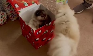 Dog Receives a Puppy as a Gift