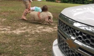 Tammy Cumbest on TikTok - #pig#piggyback#family#countrygirl#comedy#FYP