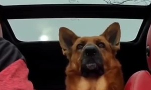 Dog proves he's a good listener with his