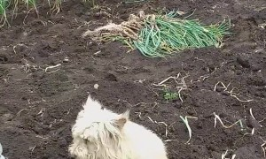 Country Dog Loves Being Covered  in Soil