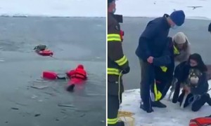 Firefighters rescue dog from frozen New York pond