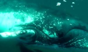 Whale Smashes Massive Fin Into Scuba Diver's Camera