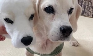 Man Makes Wool Felt Clone of Cute Puppy