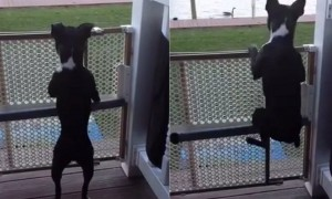 Dog Has Hilarious Way Of Jumping When He Feels Excited