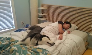 Husky Attempts To Wake Best Friend - Ends Up Snuggling Instead