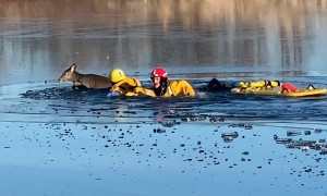 First Responders in Johnson County, Kansas rescue deer from frozen lake