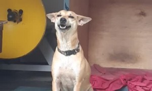 Rescue Dog has the Biggest Grin
