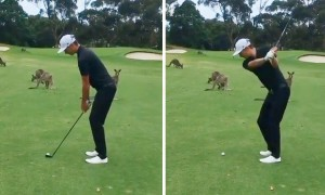Golfer's round interrupted by mob of...kangaroos?