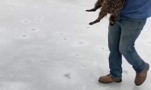 Raccoon Rescued from Frozen Lake