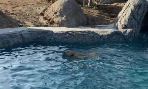Doggy Takes an Unexpected Slide Into Pool