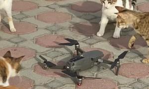 Curious Kitties Swipe at Drone