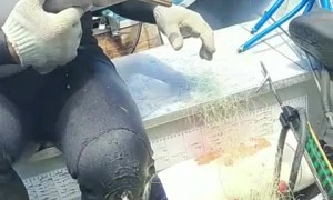 Baby Dolphin Rescued from Netting