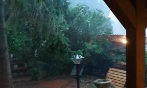 Severe Rainstorm Blows Backyard Tree Down