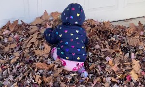 Happy Twins Play in Leaf Pile