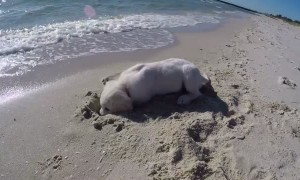 Dog Isn't Happy After Ocean Keeps Filling Hole He Dug