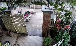 Dog Escapes as Man Tries to Move Moped Through Gate