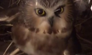 Trapped Owl Rescued and Released