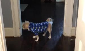 Speedy Cat Dizzies Dog