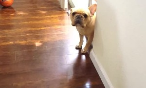 Puppy Can't Hide Guilt After Chewing The Pen