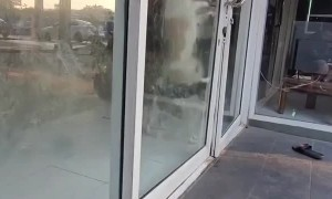 Persistent Pup Keeps Pushing Door