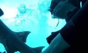 Nurse Shark Removes a Diver's Regulator