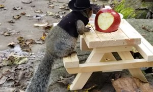 Squirrel Dressed as Cowboy is Ready for Breakfast
