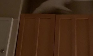 Complaining Kitty Slips off Counter