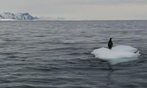Penguins Battle for Iceberg Perch