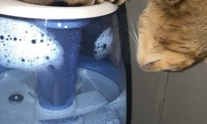 Kitty Hogs Humidifier