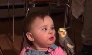 Little Girl Plays with Bird Buddy
