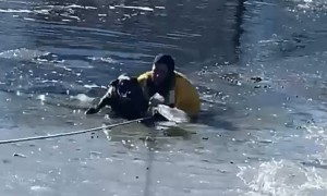 Firefighters rescue dog trapped in icy Colorado pond