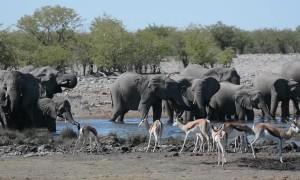 Herd of Elephants Enjoy Watering Hole
