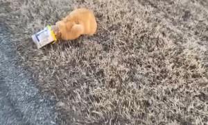 Kitty Gets Head Stuck in Mayo Jar