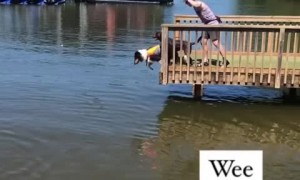 Dog loves jumping off dock into the water
