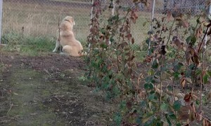 Dog Takes A-fence Playing With Cat