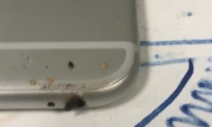 Bed Bugs Scuttle Out of Headphone Jack