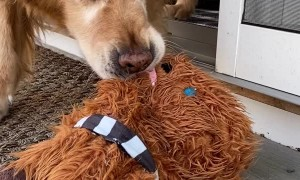 Dog Pulls Frozen Favorite Chewbacca Toy from Deck